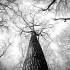 black-and-white-branches-tree-high-large